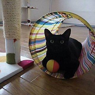 保護猫ちゃん。 黒猫の女の子。