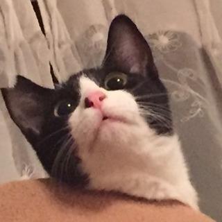 甘えん坊の白黒猫ちゃんの里親さん募集