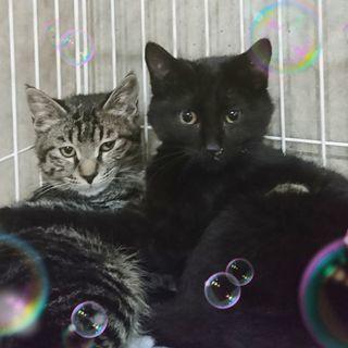 2月24日(日)新宿御苑前の譲渡会に出します❤️ ふわっとした黒猫...
