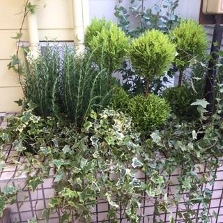 【植物のことならお任せ!】【どこよりも安く!】植物のお悩み全て解決...