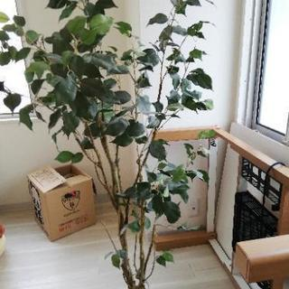 ☆ニトリ 人工観葉植物 少し難あり