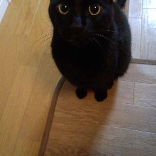 5歳の黒猫(雄)です。