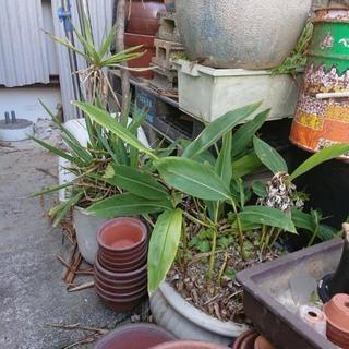 植物あげます