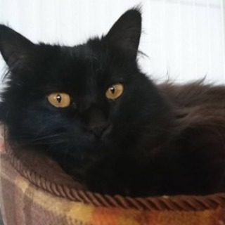 黒猫長毛女の子♪