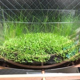 水上葉水草