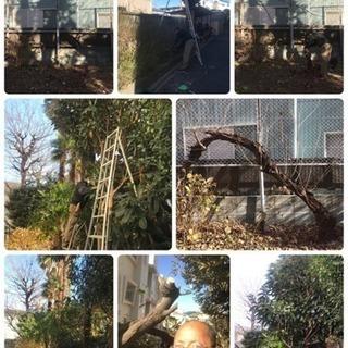 庭の手入れ 庭木の剪定 伐採 抜根致します【所沢市 狭山市入間市...
