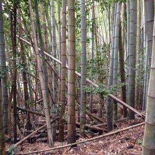 竹林の増殖で困っている方は伐採をお任せください!