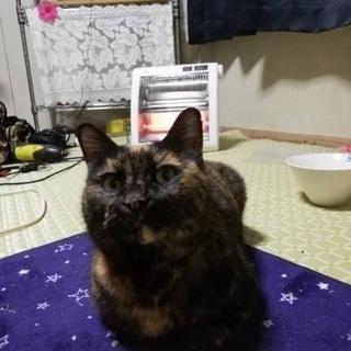 保護猫サビちゃん