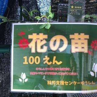 ゆうしん野菜販売*\(^o^)/*