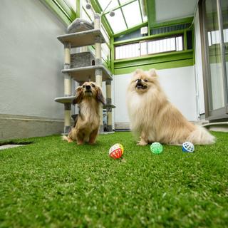 【名古屋でのペットOKシェアハウス!上飯田駅徒歩5分】Pet Share 180° 上飯田 - 不動産