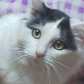 白黒猫ちゃん 1歳6ヶ月男の子