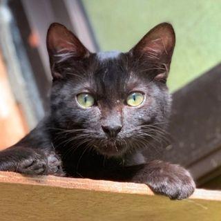 単身者OK 、黒猫、白のおパンツ