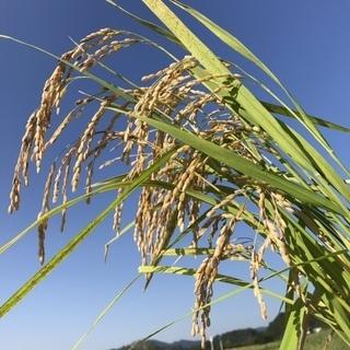農家のお米「ひのひかり」玄米(特別栽培米)25キロ8000円
