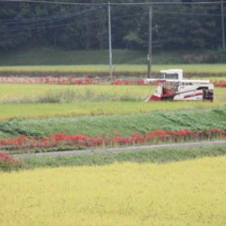 お米 平成30年度産玄米(ヒノヒカリ)特別栽培米
