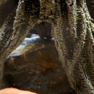 熱帯魚(淡水)6種各1匹  計6匹