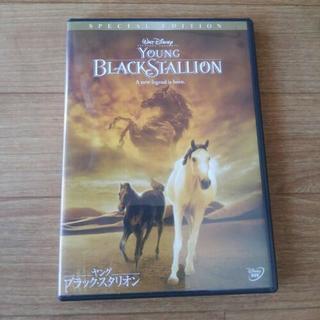 DVD 【 ヤング ブラック・スタリオン】