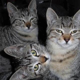 可愛い子猫もらってください。