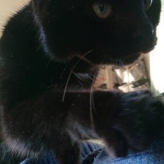 黒猫男の子2歳‼️