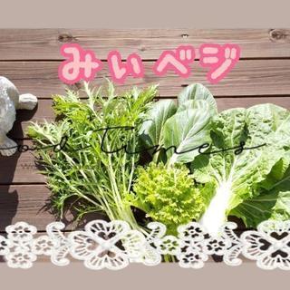 小瀬スポーツ公園付近【よねベジ】無農薬お野菜販売