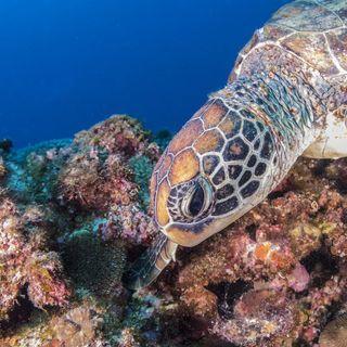 沖縄ダイビング求人・スタッフ募集 滞在無料・食事支給・未経験歓迎