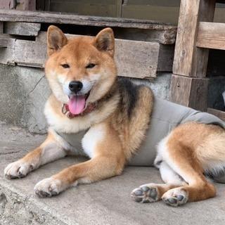 ブリーダーさんのリタイヤ犬です
