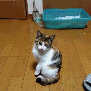 かわいい子猫さしあげます ^-^