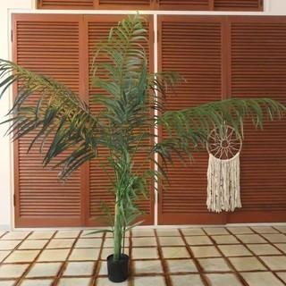 【観葉植物】パームツリー★ちょうどいい大きさです!