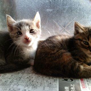 かわいい子猫たちです