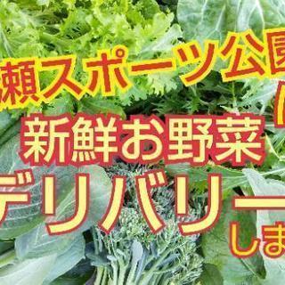 無農薬お野菜のデリバリー開始【よねベジ】