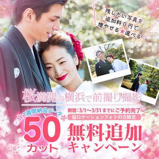 横浜 桜満開の横浜で前撮り撮影 1週間納品データ 3/1~3/31...