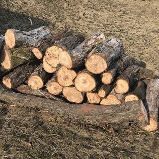 薪や焚き付けにいかがでしょう ブドウ 巨峰の木 使っていただける...