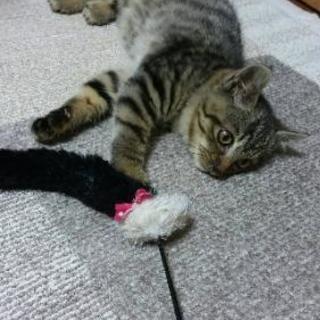🐱子猫里親募集🐱
