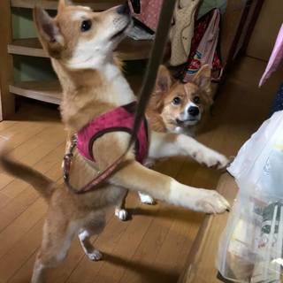 (里親決定!)下関市豊田町で生まれた天ちゃん