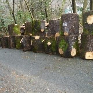 伐採やります
