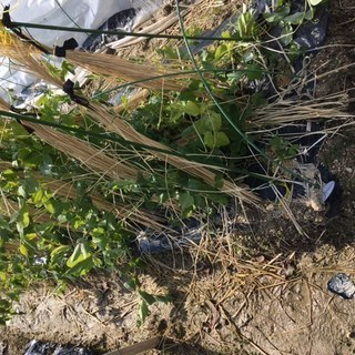 家庭菜園用地 1区画 約30坪 農業水道設備、パ-キング有り 年間...