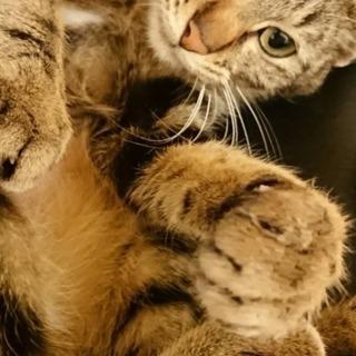 生後4、5ヶ月 メス子猫