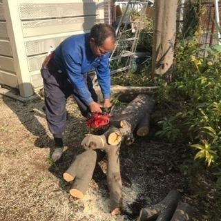 木の剪定 伐採ならお任せ下さい 庭の手入れ店【所沢市 狭山…