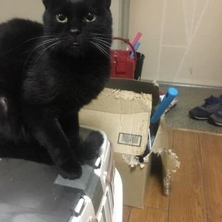 大人しい黒猫ちゃん