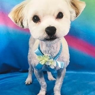 可愛がってくれる方。2歳 オス ミックス犬!