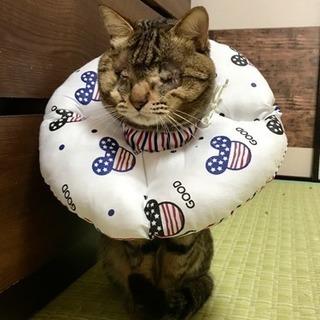 盲目猫のトラちゃん