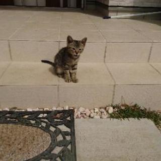子猫の貰い手探しています。