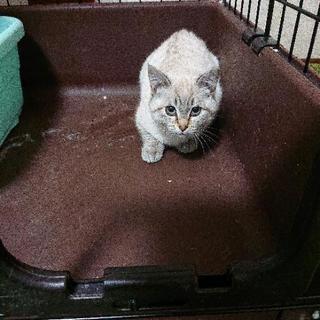 生後3、4ヶ月の子猫の里親さん募集