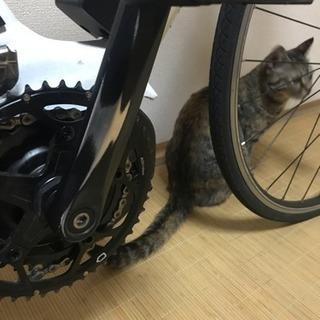 ヤマハypjクロスバイク Mサイズ