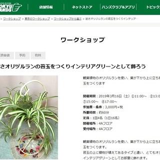東急ハンズ渋谷店で「吊りの逆さオリヅルランの苔玉ワークショップ」開催。