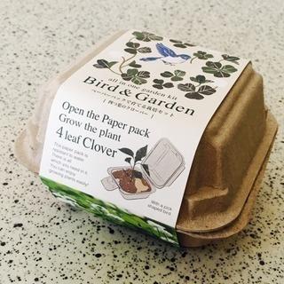 ★半額値下げ❗️★幸せの四つ葉のクローバー栽培キット