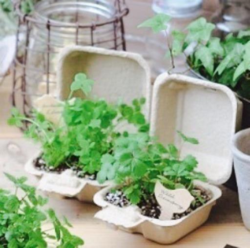 e2e7bded056be ☆5月末まで表示半額❗️☆幸せの四つ葉のクローバー栽培キット (ポピー ...