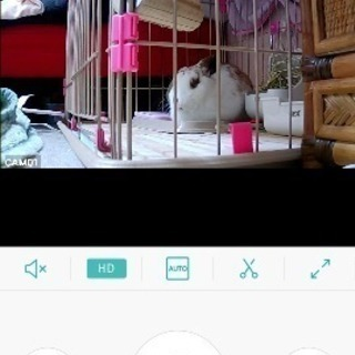 ウサギの里親募集です
