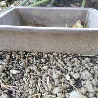 中古 盆栽鉢 5個セット