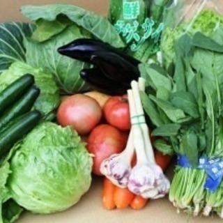 野菜の卸売業者です😊