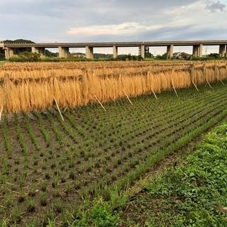 天日干100%コシヒカリ大和米🌾産地直送🚛